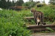 A Balmeggberg cat