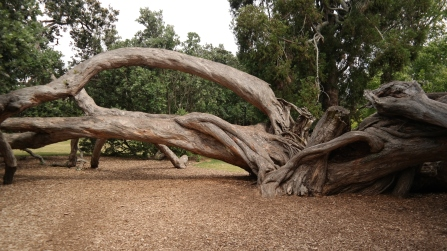 The climbable tree