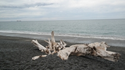 A dead tree on the beach