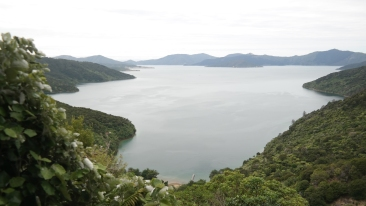 View from the Queen Charlotte Sound Track