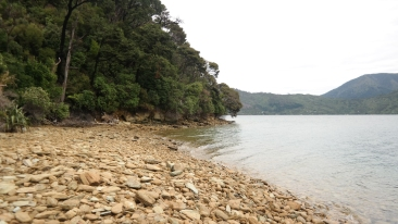 A beach in Queen Charlotte Sounds