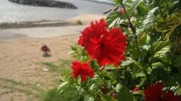 Flowers in Manase