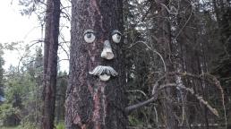 Weird tree face