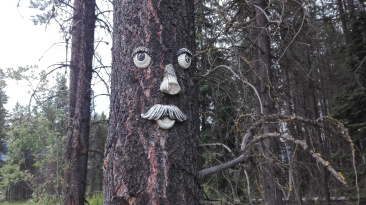 Weird tree face