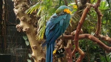 Arte the Macaw