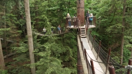On the treetop walkway
