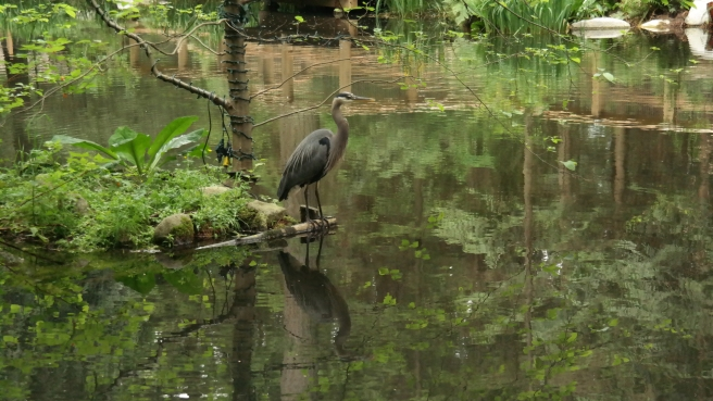 A great blue heron