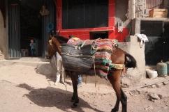 A laden donkey